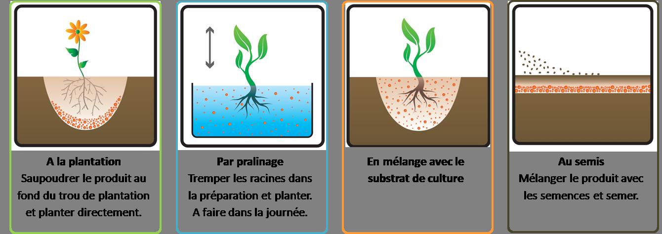 Application des Mycorhizes