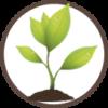 Analyses à partir de la plante